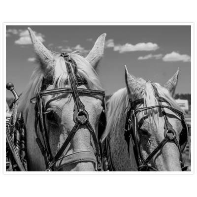 Painel Adesivo Para Parede Cavalos