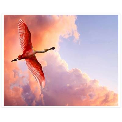 Painel Adesivo Para Parede Pássaro