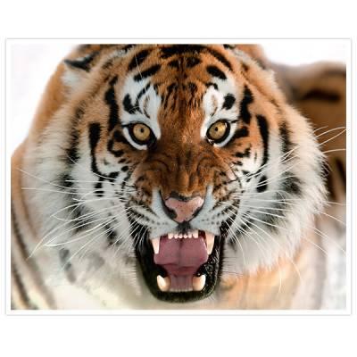 Painel Adesivo Para Parede Tiger