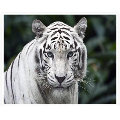 Painel Adesivo Para Parede Tigre Branco