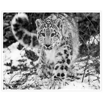 Painel Adesivo Para Parede Tigre Branco 1