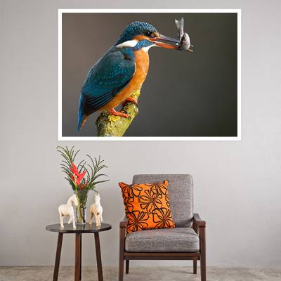 Painel Adesivo Para Parede pássaro pescando